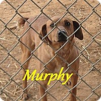 Adopt A Pet :: Murphy - Linden, TN