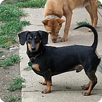 Adopt A Pet :: YOYO - DAYTON, OH