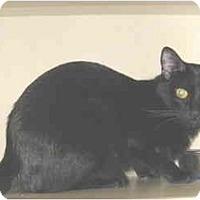 Adopt A Pet :: Ebony - Mesa, AZ