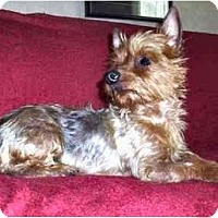 Adopt A Pet :: Bella - Mooy, AL