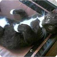 Adopt A Pet :: Tate - Jacksonville, FL