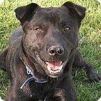 Adopt A Pet :: Slater  # 4921 - Jerome, ID