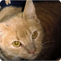 Adopt A Pet :: Tanner - Medway, MA