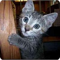 Adopt A Pet :: Starbright - Irvine, CA