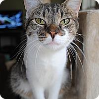 Adopt A Pet :: Bobby - Waxhaw, NC