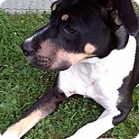 Adopt A Pet :: Beau - Bardonia, NY