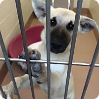 Adopt A Pet :: Sparky - Mill Creek, WA