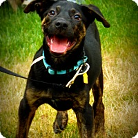 Adopt A Pet :: Ringo - Wappingers, NY