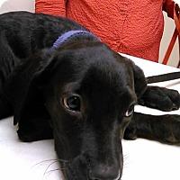 Adopt A Pet :: Betsy Ross - Gainesville, FL