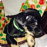 Adopt A Pet :: Bo Star - Huntsville, AL