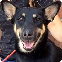 Adopt A Pet :: COLETTE (video) - Los Angeles, CA