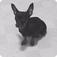 Adopt A Pet :: Rosita - Avon, NY