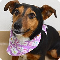 Adopt A Pet :: Tamale - Dublin, CA