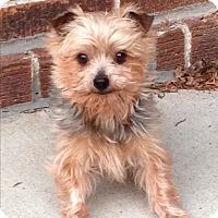 Adopt A Pet :: Flynn - Sheboygan, WI