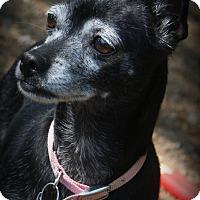Adopt A Pet :: Lola - O Fallon, IL