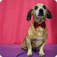Adopt A Pet :: *NORTON - Sugar Land, TX