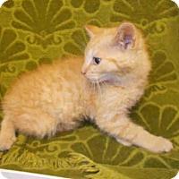 Adopt A Pet :: *VINCENT - Upper Marlboro, MD