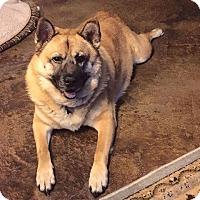 Adopt A Pet :: Henry James - Austin, TX