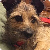 Adopt A Pet :: Lena - Las Vegas, NV