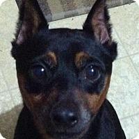 Adopt A Pet :: Rugby - Newnan, GA