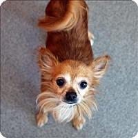 Adopt A Pet :: Nigel - McKinney, TX