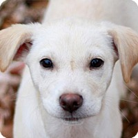 Adopt A Pet :: Aaden - Staunton, VA