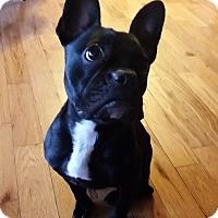 Adopt A Pet :: Chloe - Columbus, OH