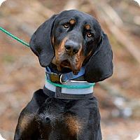Adopt A Pet :: Augustus - Pottsville, PA