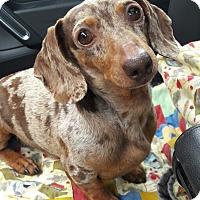 Adopt A Pet :: Goober - Salem, OR