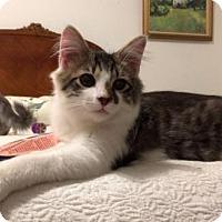 Adopt A Pet :: Nate - Philadelphia, PA