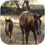 Other/Unknown for adoption in El Dorado Hills, California - Honey