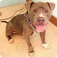 Adopt A Pet :: Hoss super URGENT - Sacramento, CA