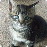 Adopt A Pet :: Magellan - Catasauqua, PA