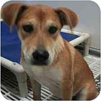 Adopt A Pet :: Rosalie - Alexandria, VA