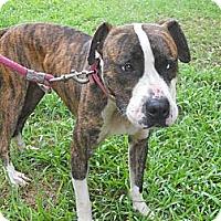 Adopt A Pet :: Bishop - Conyers, GA