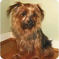 Adopt A Pet :: Solana - Mooy, AL