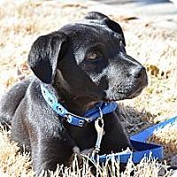 Adopt A Pet :: Rowdy - Cumming, GA