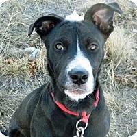 Adopt A Pet :: Chewy - Cheyenne, WY