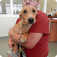 Adopt A Pet :: Peanut - Grand Rapids, MI