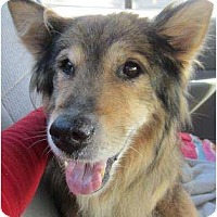 Adopt A Pet :: Darby - La Habra, CA