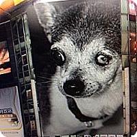 Adopt A Pet :: Zues - S. Pasedena, FL