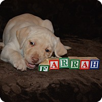 Adopt A Pet :: Farrah - Ogden, UT