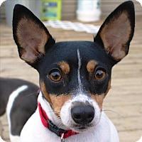 Adopt A Pet :: Lolita (VA) - Virginia Beach, VA