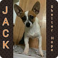 Adopt A Pet :: Jack - Valencia, CA