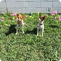 Adopt A Pet :: Jigger - Lockhart, TX