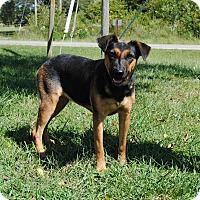 Adopt A Pet :: Sheba - Parsons, KS