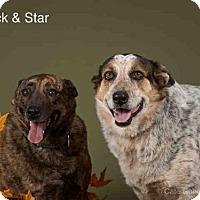 Australian Cattle Dog Mix Dog for adoption in Santa Fe, New Mexico - STAR