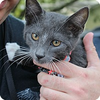 Adopt A Pet :: Mittens - Ocean Springs, MS