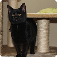 Adopt A Pet :: Ebony - Cedar Rapids, IA
