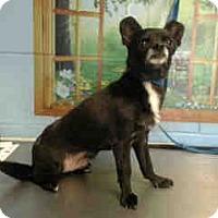 Adopt A Pet :: URGENT ON 1/7  San Bernardino - San Bernardino, CA